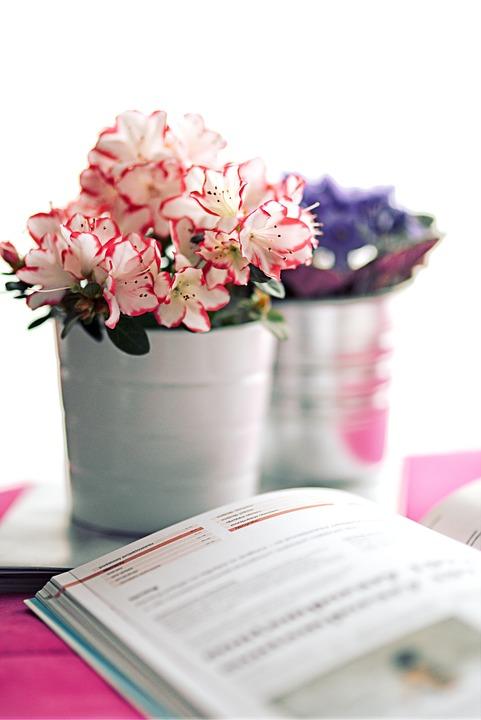 zimmerpflanzen-hausmittel