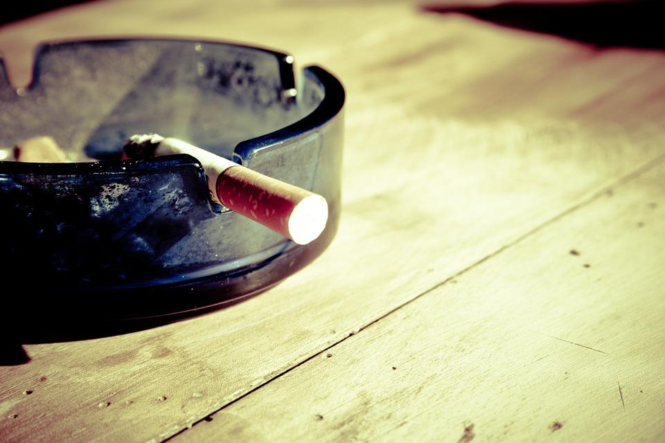 nikotin-gegen-trauermücken