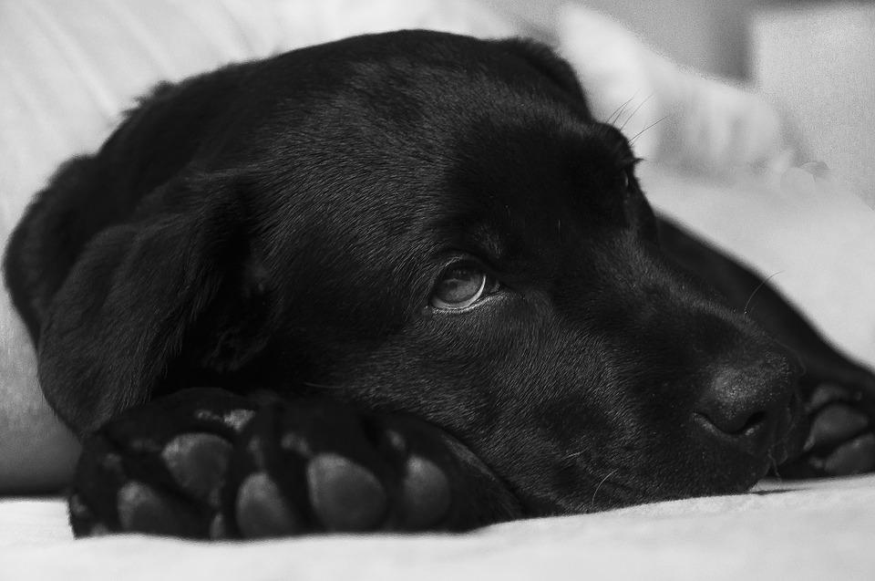 hausmittel gegen gelenkschmerzen bei hunden arthrose. Black Bedroom Furniture Sets. Home Design Ideas
