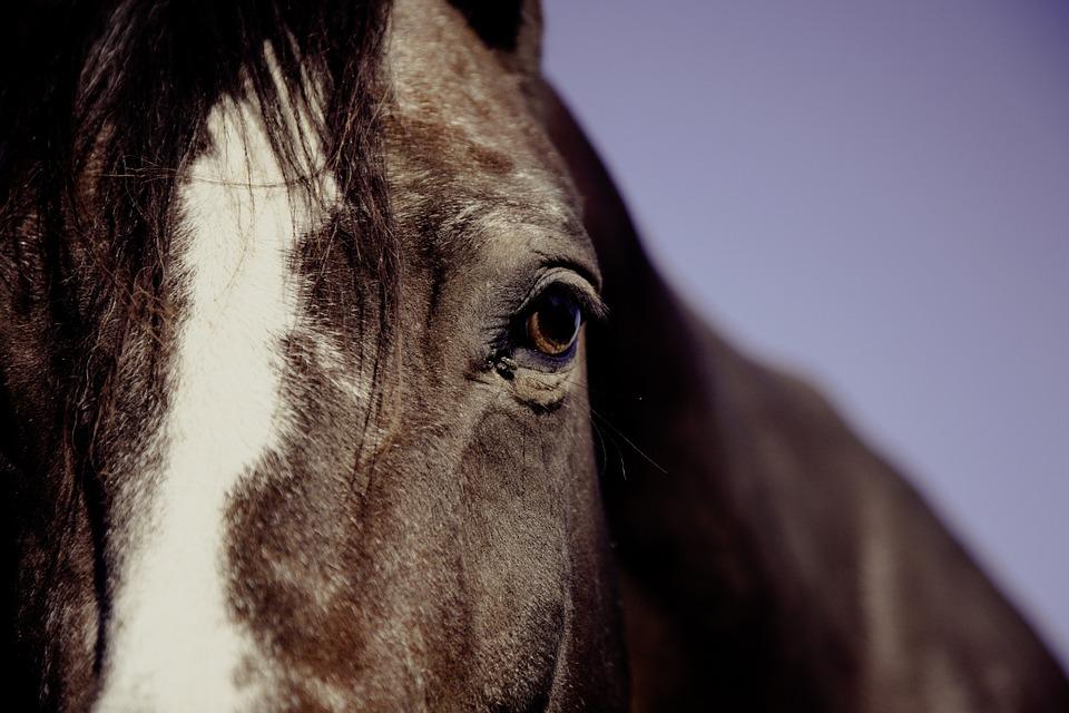 mauke-behandeln-pferd