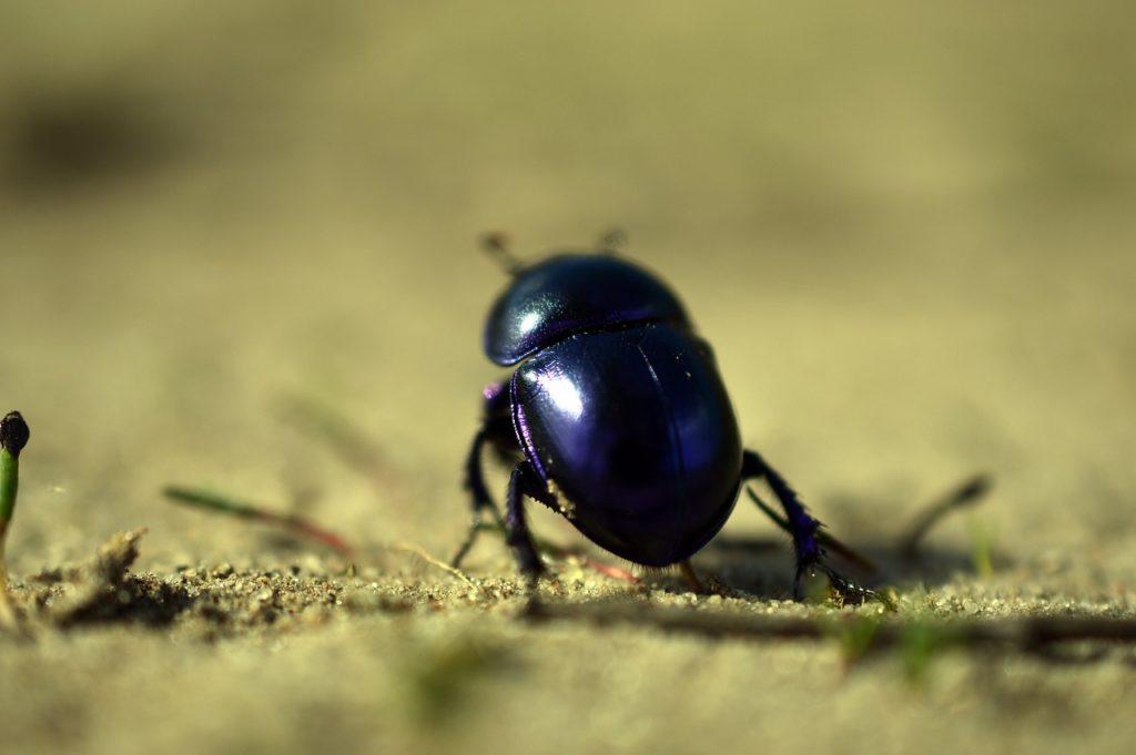 Käfer in der Küche